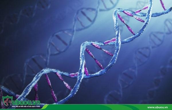 Yếu tố di truyền là một nguyên nhân