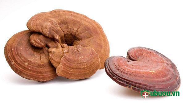 Nấm linh là thành phần quan trong trong thuốc ancan