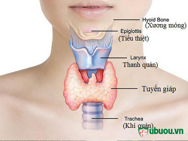 đặm điểm của ung thư tuyến giáp và vị trí ung thư tuyến giáp xuất hiện