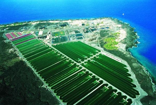 Hình ảnh khu nuôi trồng tảo của nhật bản