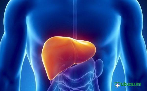 Vị trí của gan trong cơ thể